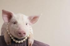 pink-pig-in-pearls